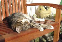 Clyde T Cat